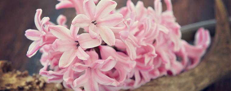 Come piantare i bulbi che fioriranno a primavera - Bulbi estivi quando piantarli ...
